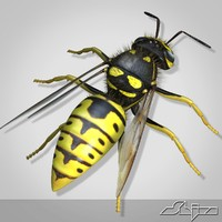 wasp modeled 3ds