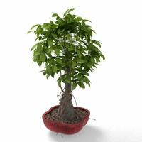plant tree flower max