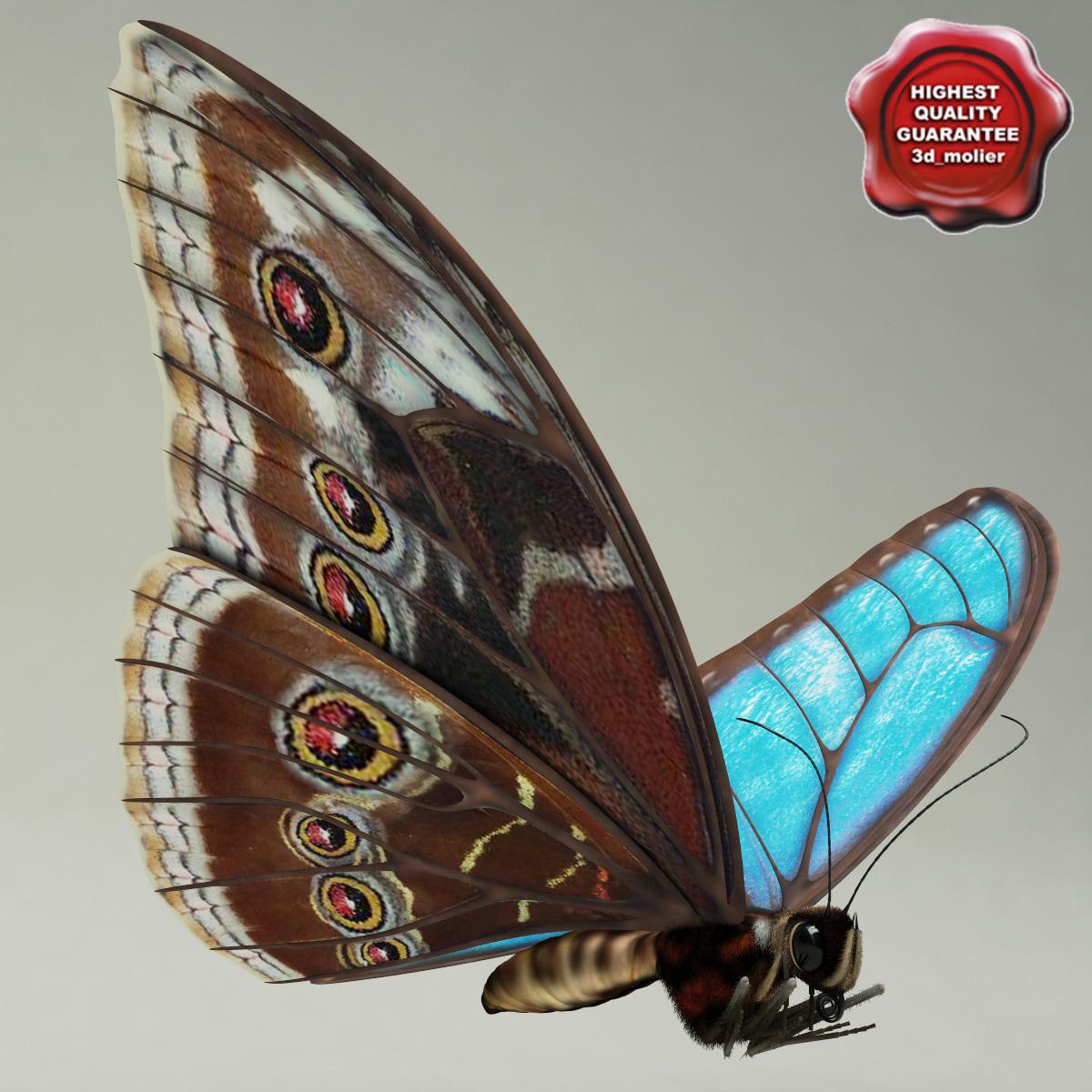 Blue_Morpho_Butterfly_Pose2_00.jpg