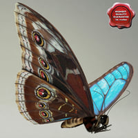 Blue Morpho Butterfly Pose2