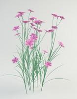 dianthus plumarius 3d obj