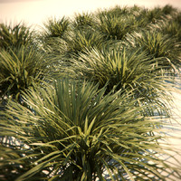 HQ-Vegetation - Wild grass