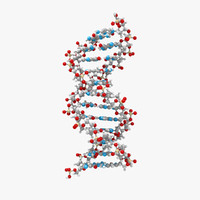 3d dna double