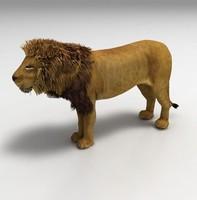 lion max
