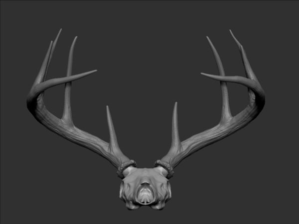 maya white tailed deer - White Tailed Deer Skull & Antlers... by ericsstudio