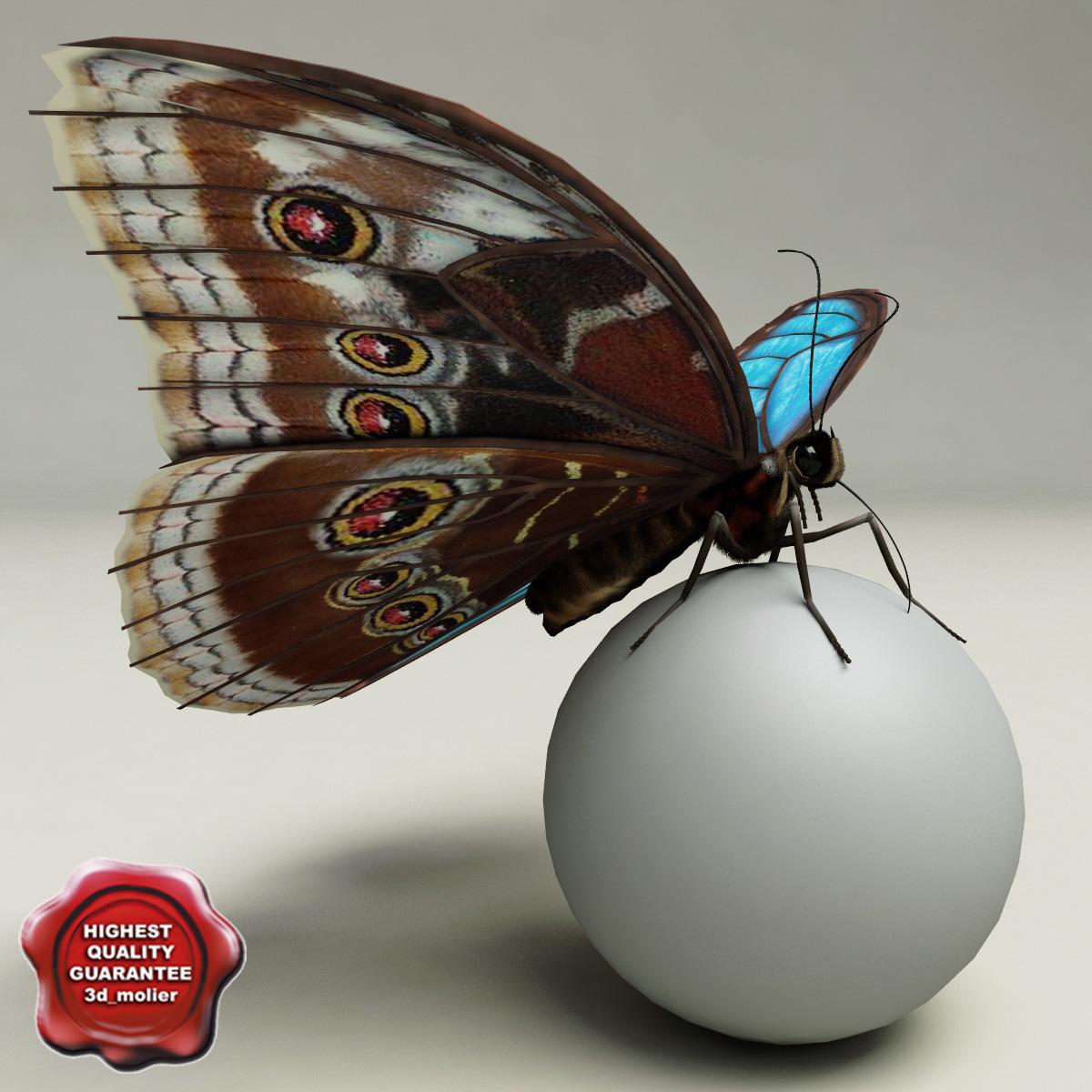 Blue_Morpho_Butterfly_Pose3_00.jpg