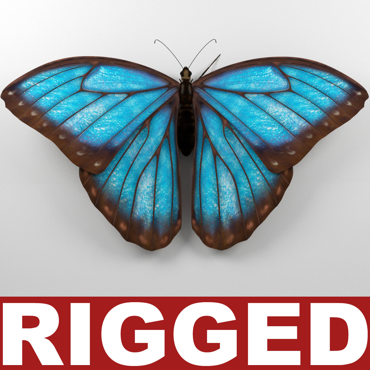 Blue_Morpho_Butterfly_Rigged_00.jpg