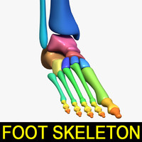 human foot skeleton 3d obj