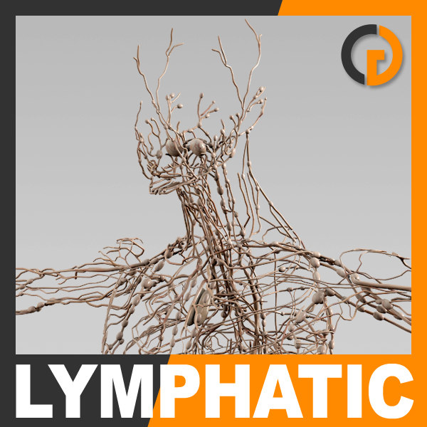 Human Lymphatic System - Anatomy