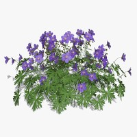 geranium landscaping flower 3d model