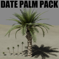 date palm tree 3d obj