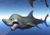 free fish shark 3d model