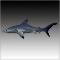 Low Poly Blue Shark