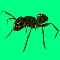 maya glass ant