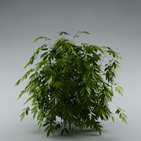 bush garden bamboo 3d max