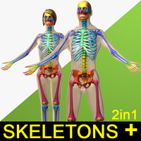 3d human male female skeleton