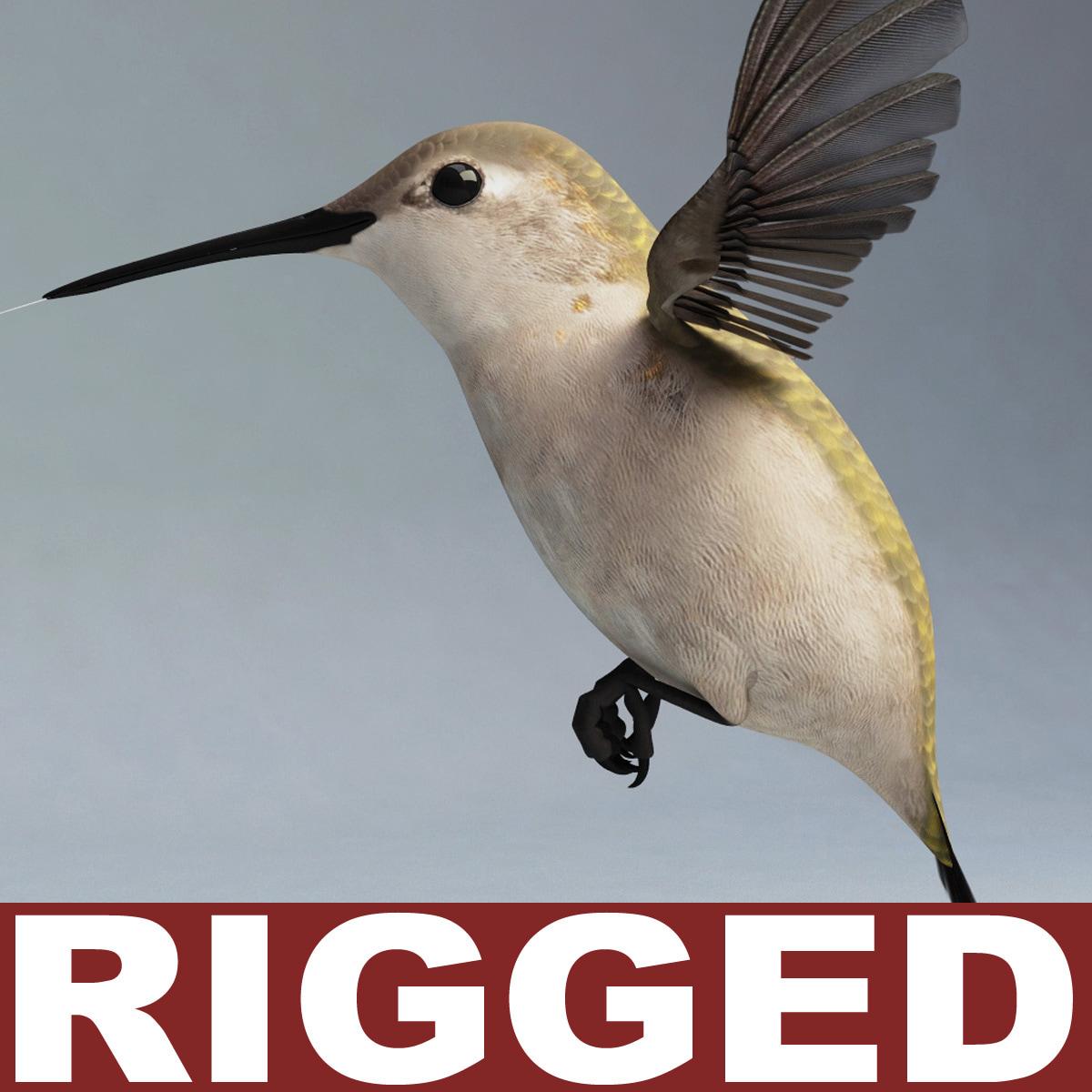 Hummingbird_Rigged_00.jpg