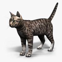 Cat - lite
