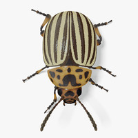 3d colorado potato beetle model