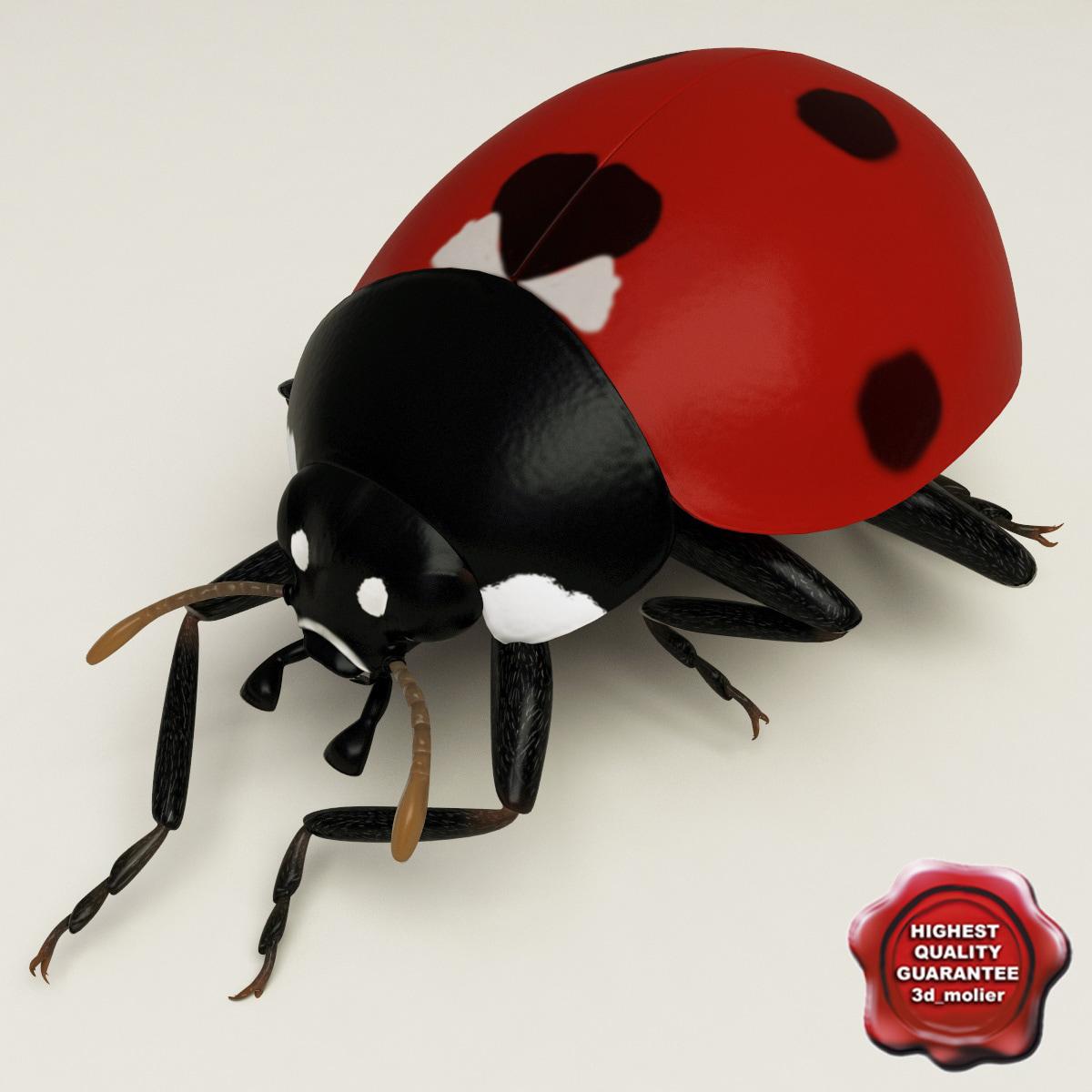 Ladybug_Pose7_00.jpg