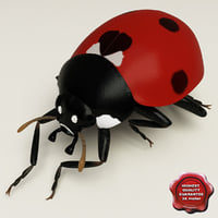 Ladybug Pose7