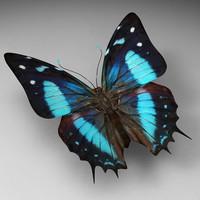 butterfly butt obj