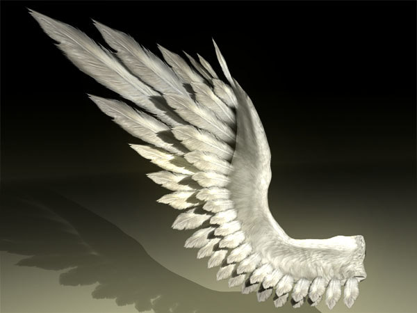 bird angel wing 2.jpg