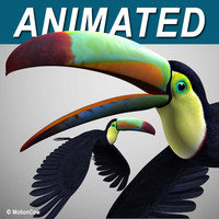 realistic flying toucan 3d model