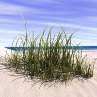 cinema4d marram grasses