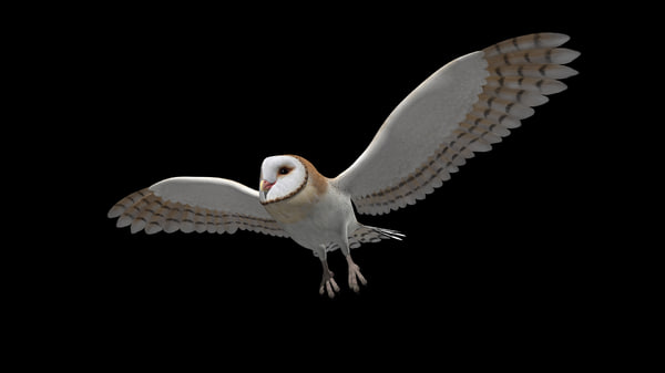 Snowy owl in flight at night - photo#3