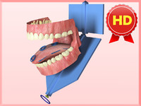 anatomically correct gums teeth 3d model