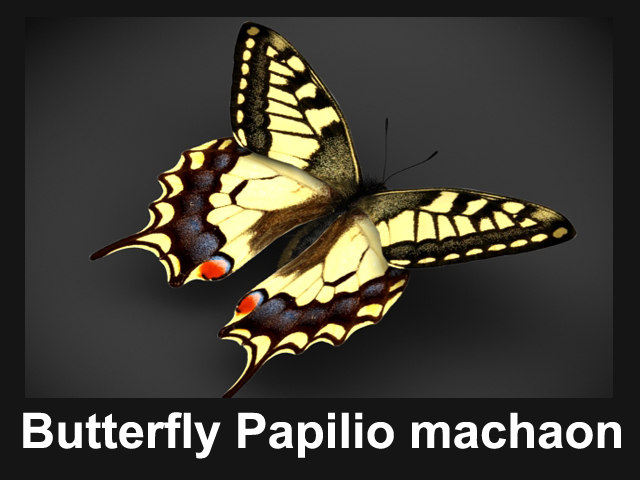 buttefly_papilio_preview_v01.jpg
