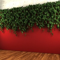 max wall hanging plant