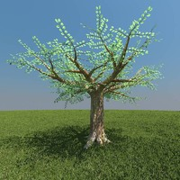 free african tree 3d model