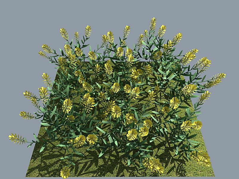 Flower_Vinca_Yellow_MAX8_Vray1.png