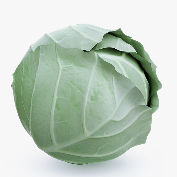 Cabbage 3D Models and Textures | TurboSquid.com