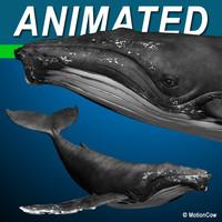 humpback whale hump 3d model