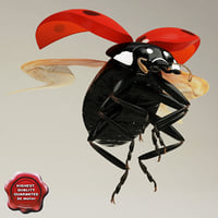 3d ladybug pose2 model