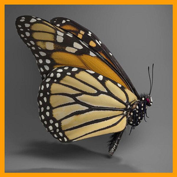 monarch_side02_400.jpg6c1c9643-813e-4298-a044-6526fd70b627Larger.jpg