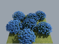 flower myosotis heavy 3d model