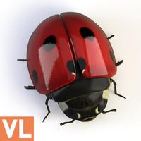 3d model ladybird