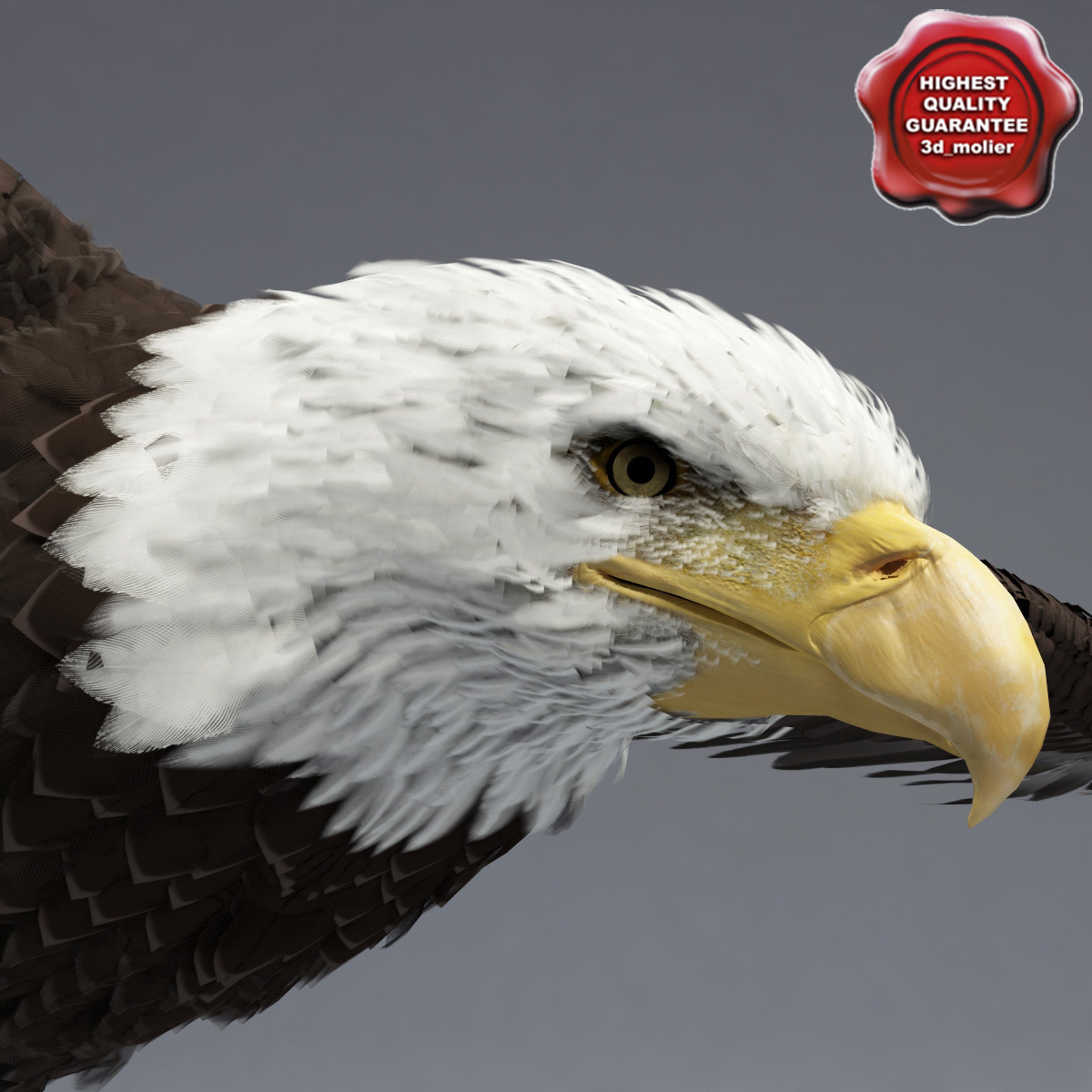 Bald_Eagle_Pose2_00.jpg