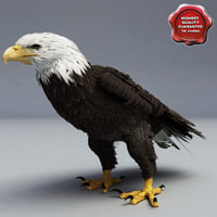 Bald Eagle Pose 6
