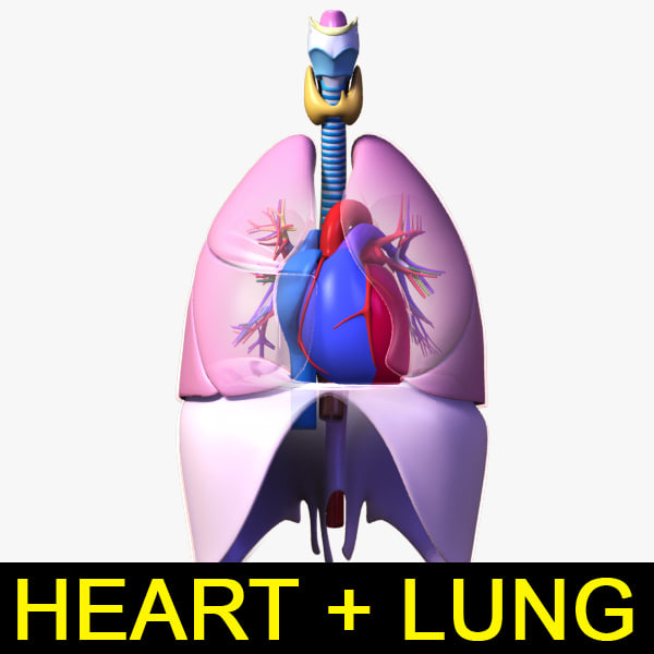 Heart_Lung_leo3dmodels_000.jpg