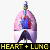 Heart + Lung