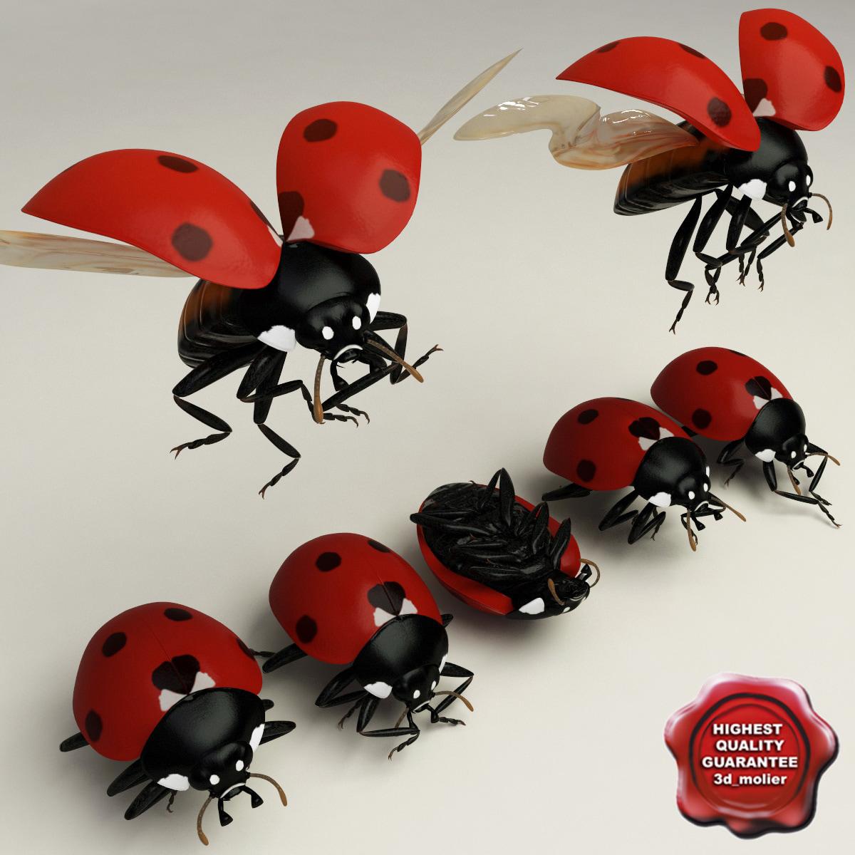 Ladybug_Poses_Collection_00.jpg