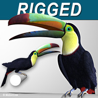 realistic toucan wings folded max