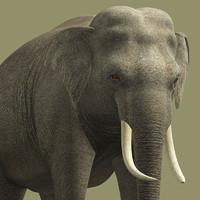 obj elephant-g elephant