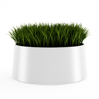 decorative grass 3d model