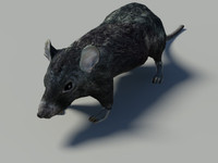 rat  3d  mid-poly model